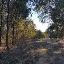 Rutherglen Carlyle Bushland Reserve Walking Tracks - 1