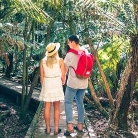 Wirrawilla rainforest walk Murrindindi