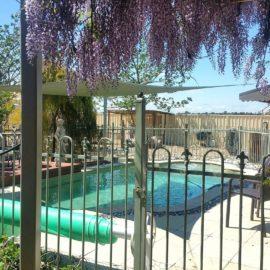 Swimming Pool at Must Love Dogs B&B