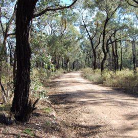 Box ironbark forest outside Chiltern