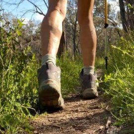 Trekking in the Bush