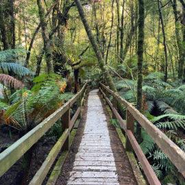 Wirrawilla Rainforest Walk