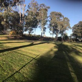 Beechworth-Mayday-Eucalyptus
