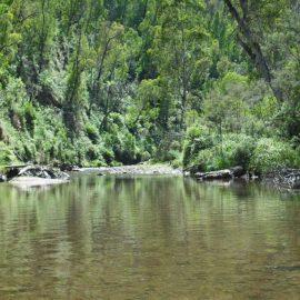 Howqua River Walk