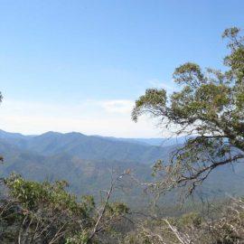Mt Timbertop (Saddle to Summit)