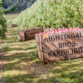 Alpine Apples Nightingale Bros pedal to produce