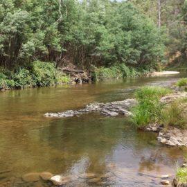 Goulburn River at Skipworth Reserve