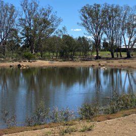 Rutherglen Gold Club overlooks Lake King Wetlands