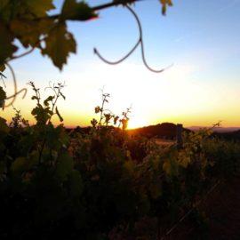 Glenbosch Wine Estate