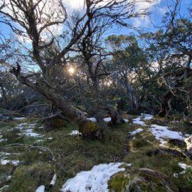 Mount Torbreck
