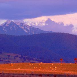 View of Mt Buller