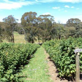 High Grove Berry Farm