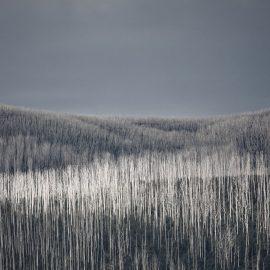 Landscape Mountain Ash