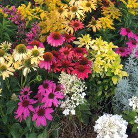 Summer colour flowers