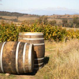 Wine Barrels at Savaterre Vineyard