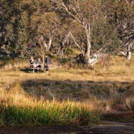 Australian bushland