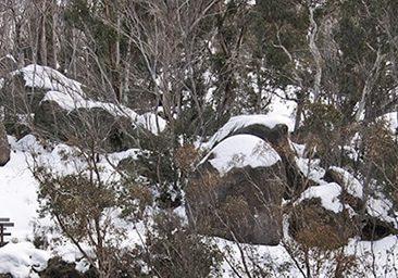 Mount Buffalo Winter Walks