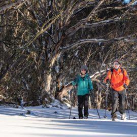 Cross country skiing - serenity